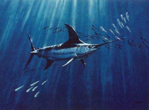 Qılınc balığı